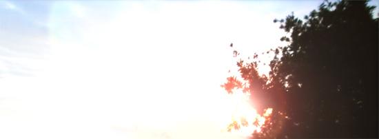 トトロの森 夜明け